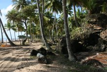 Coconut Trail